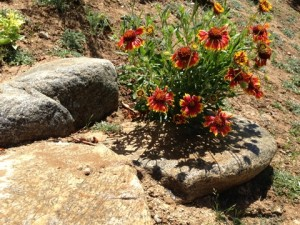 May - Gaillardia & Rocks