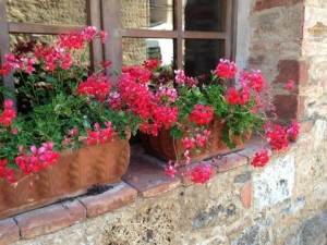 Containers - Monteriggioni window boxes