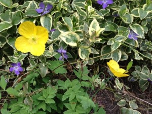 July - Ground Covers Bingly, UK