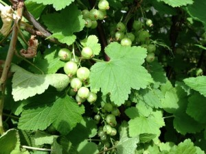 June - Currants UK