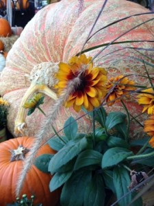 Oct - Pumpkin & Rudbeckia