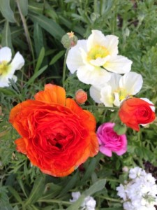 Feb - Ranunculus & Iceland Poppies