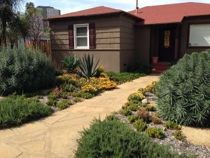 Drought Tolerant entry