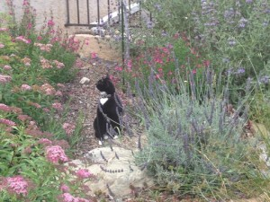 June - Garden Kitty