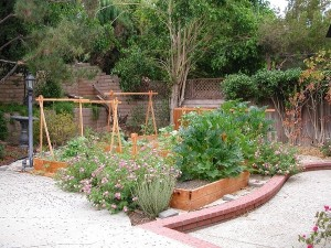 Vegetable Garden - Hill
