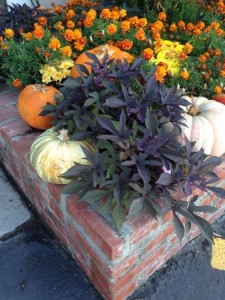 Halloween Planter Bed