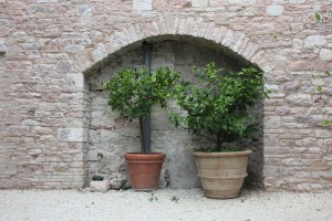 Garden Ornaments - Fruit Trees in Containers