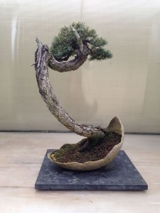 March - Bonsai art