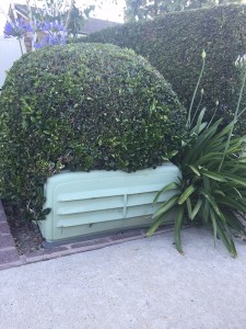 How Not - Ravenous Hedge Plant