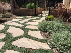 Drought Tolerant Pathway & Beds