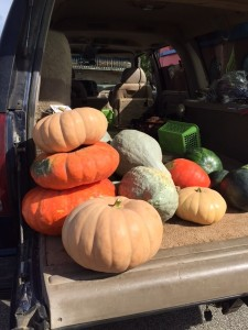 Farmer's Market - Pumpkins Plus