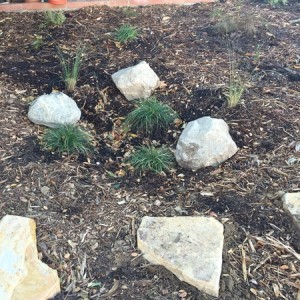 Cold Weather - simple rain garden