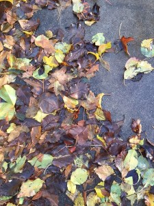 January - Wordless Wednesday - Wet Leaves