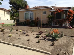 Drought Tolerant - Bad Design