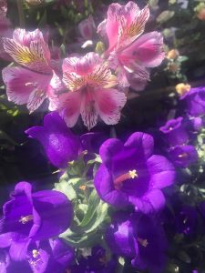 June - Wordless Wednesday - Alstromeria-Campanula