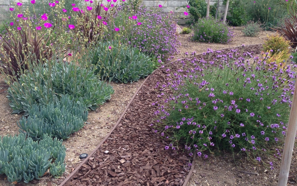 valencia-lawn-reduction-pathway